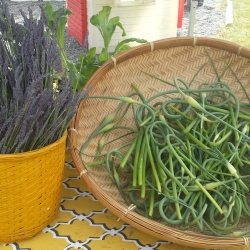 Lavender and scapes