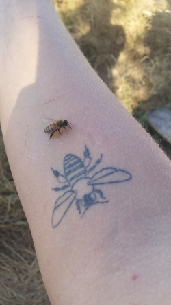 Bee friend met bee friend