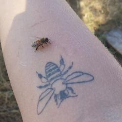 Bee friend met bee friend